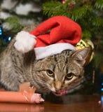 вал шерсти кота Стоковые Изображения RF
