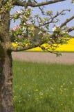 вал яблока зацветая Стоковая Фотография RF