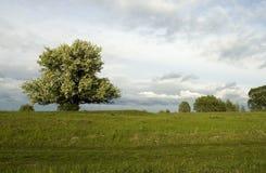 вал яблока blossoming Стоковые Изображения