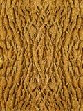 вал дуба расшивы Стоковое Фото