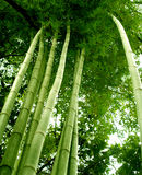 вал 02 бамбуков Стоковые Фото