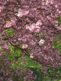 вал 02 цветений стоковое фото rf