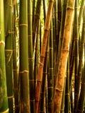 вал 89 бамбуков Стоковое Изображение
