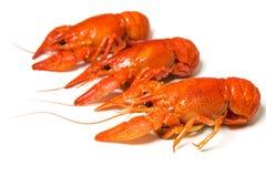 вал crayfishes Стоковая Фотография RF