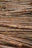 Вал Ecalyptus в штоке Стоковые Изображения