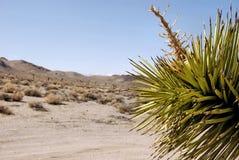 вал joshua пустыни Стоковые Фото