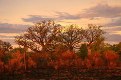 вал kimberly boab Австралии Стоковое фото RF