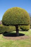 вал topiary Стоковые Изображения