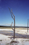 вал yellowstone горячих весен Стоковое фото RF