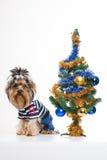 вал yorkshire terrier рождества милый близкий Стоковое Фото