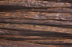 ваниль фасолей Стоковое фото RF