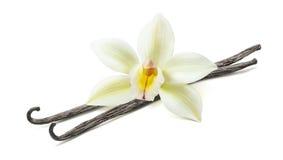 Ванильная изолированная диагональ 2 стручка цветка стоковое фото