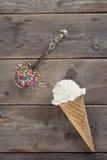 Ванильный конус мороженого Стоковое Изображение