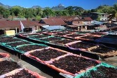 Ваниль в Sambava стоковая фотография rf