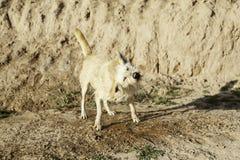 Ванна грязи собаки Стоковое фото RF