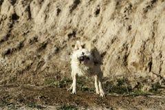 Ванна грязи собаки Стоковые Фотографии RF