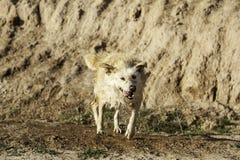 Ванна грязи собаки Стоковая Фотография RF