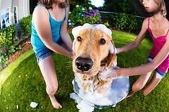 Ванна собаки Стоковая Фотография