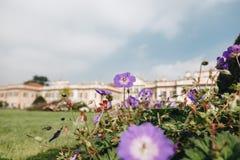 Варезе ОКТЯБРЬ 2018 ИТАЛИЯ - цветки против дворца Estense, или Palazzo Estense стоковые фотографии rf
