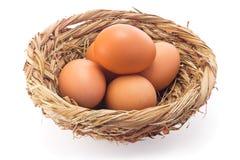 Вареное яйцо Стоковое Изображение