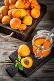 Варенье абрикоса в малом опарнике Стоковые Изображения RF