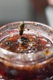 Варенье конуса сосны Стоковые Изображения