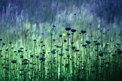 Василёк Cornflower и уникальная нерезкость стоковое изображение