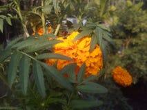 вау цветочного сада Стоковые Изображения RF