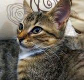 Вау это amaizing кот стоковое изображение