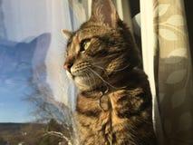 Вахта кота Стоковые Фотографии RF