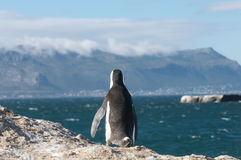 вахта пингвина стоковые фото