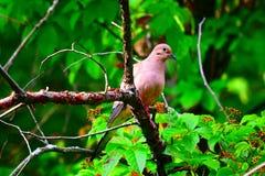 Вахта 2 птицы Стоковое Изображение RF