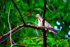 Вахта птицы Стоковое Изображение