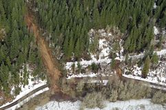 вашингтон грязевых оползней пущи Стоковая Фотография