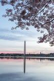 вашингтон памятника вишни цветений Стоковые Фото