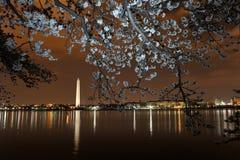 вашингтон dc вишни цветения Стоковое Изображение