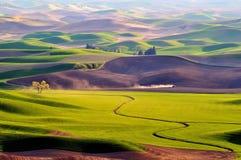 вашингтон palouse сельскохозяйствення угодье Стоковое фото RF
