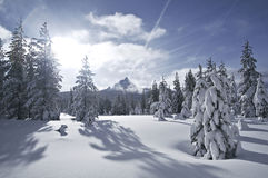 вашингтон snowfield mt Стоковые Фото