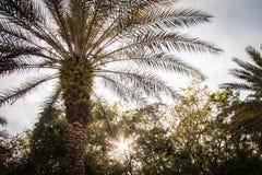 вал ладони острова Корсики среднеземноморской принятый съемкой Стоковые Изображения RF