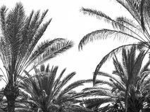 вал ладони острова Корсики среднеземноморской принятый съемкой Стоковые Изображения