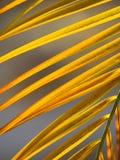 вал ладони острова Корсики среднеземноморской принятый съемкой Стоковая Фотография