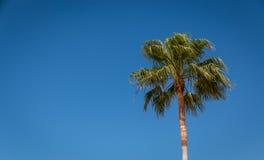 вал ладони острова Корсики среднеземноморской принятый съемкой Стоковое фото RF