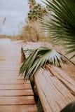 вал ладони острова Корсики среднеземноморской принятый съемкой Стоковые Фотографии RF