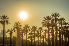 вал ладони острова Корсики среднеземноморской принятый съемкой Стоковое Фото