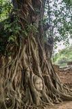 вал Будды головной Стоковое Изображение