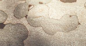 вал близкой съемки расшивы вверх Деталь коры дерева Стоковое Изображение RF