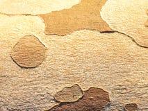 вал близкой съемки расшивы вверх Деталь коры дерева стоковые фотографии rf