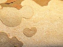 вал близкой съемки расшивы вверх Деталь коры дерева Стоковые Фото