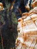 вал близкой съемки расшивы вверх стоковая фотография rf