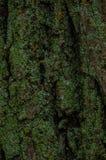 вал близкой съемки расшивы вверх Стоковое фото RF